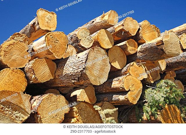 Logs piled at mountain pine beetle clearcut, near Collins Lake, BC
