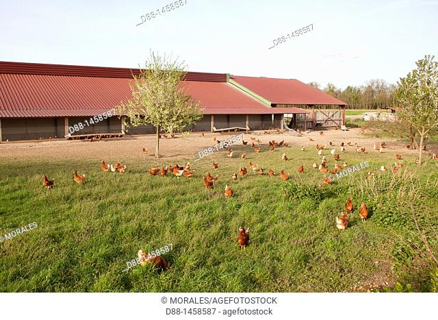France, Bas Rhin , Breeding poultry