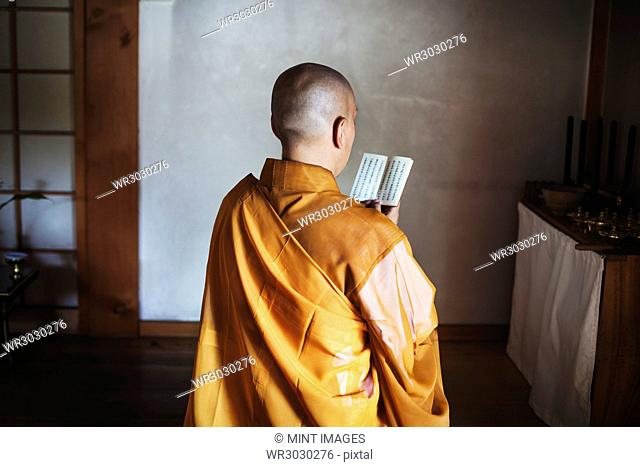 Rear view of Buddhist monk with shaved head wearing golden robe sitting indoors in a temple, holding prayer text