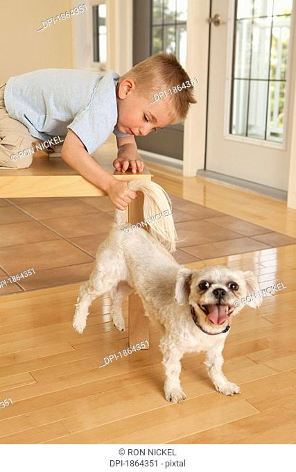 Boy pulling dog tail