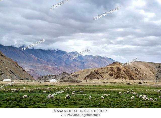 Nomads campsite during their summer festival in Tso Moriri lake, Ladakh (India)