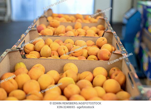 Boxes in a line full of ripe apricots (Prunus armeniaca) ready to be sold at the Bronisze Wholesale Market - one of the biggest fruits and vegetables markets in...