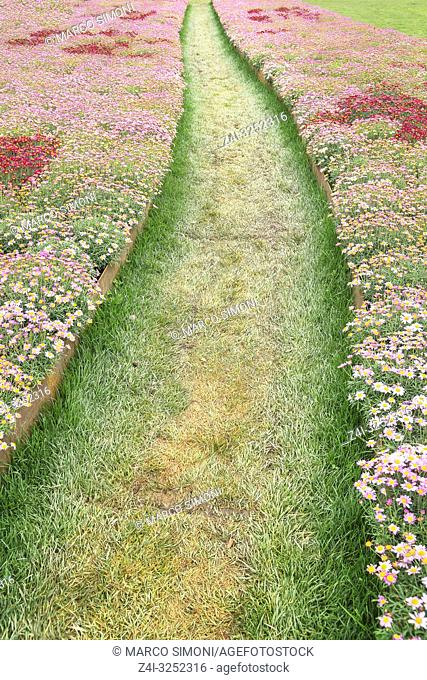 Path cutting through blooming flowers, Liguria, Italy,