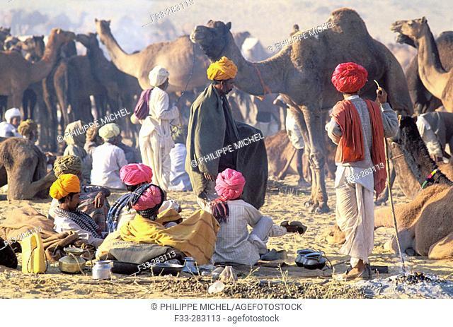 November camel fair. Pushkar. Rajasthan. India