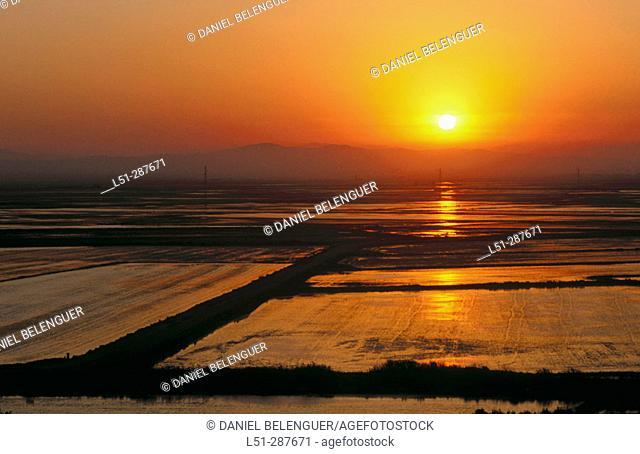 Rice (Oryza sativa) fields. La Albufera. Sueca, Valencia province. Spain