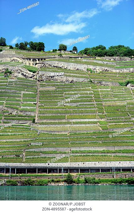 Weinberge am Norduifer des Genfer Sees / Wineyards at the norther shore of Lake Geneva