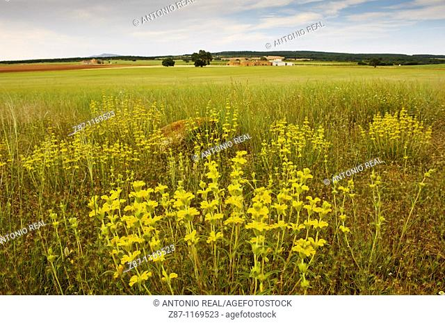 Los Pozuelos, Almansa, Albacete province, Castilla-La Mancha, Spain