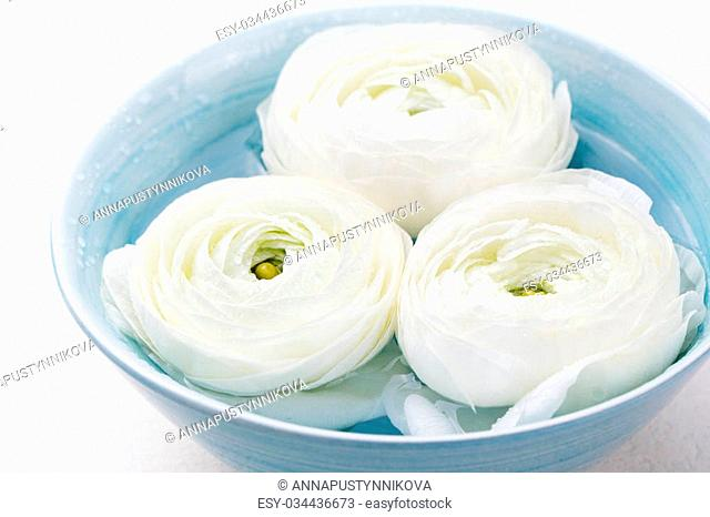 White floating ranunculus flowers. Spa wellness background
