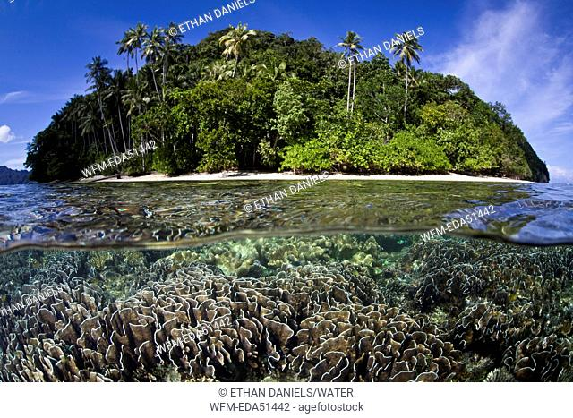 Corals on shallow Reef Top, Raja Ampat, West Papua, Indonesia
