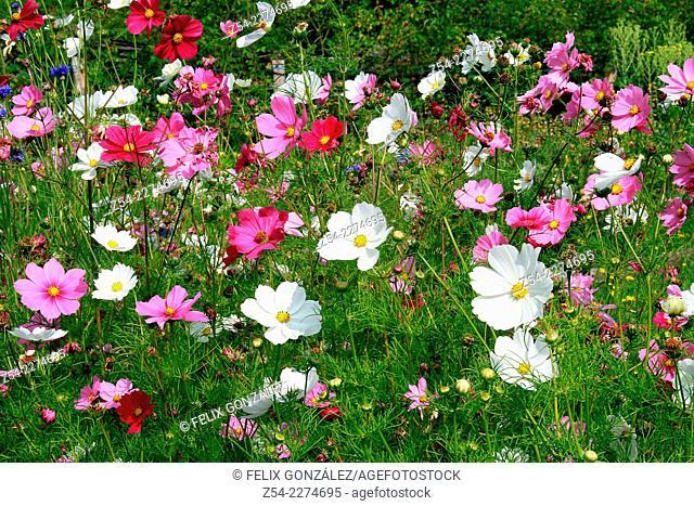 Wildflowers field at Asturias, Spain