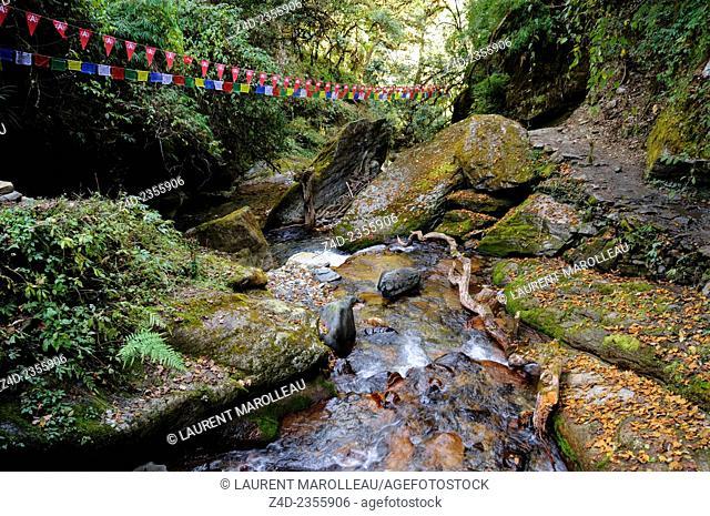 Watercourse between Ulleri and Ghorepani Village. Kaski District, Gandaki Zone, Annapurna Conservation Area, Western Region Pashchimanchal, Nepal