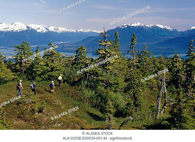 People Hiking Through Muskeg & Forest SE AK Summer Tongass NF