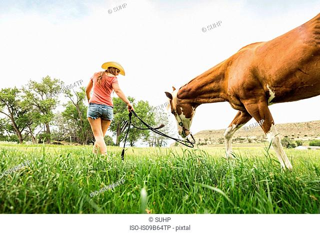 Young woman leading horse through field, rear view, low angle view