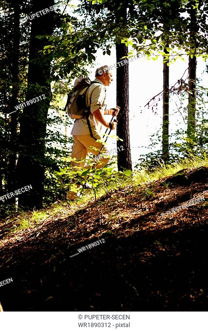 Senior man Nordic Walking through forest, Osterseen, Germany