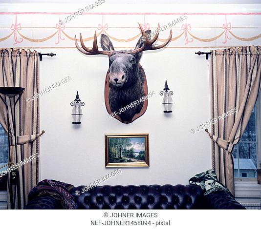 Hunting trophy in living room