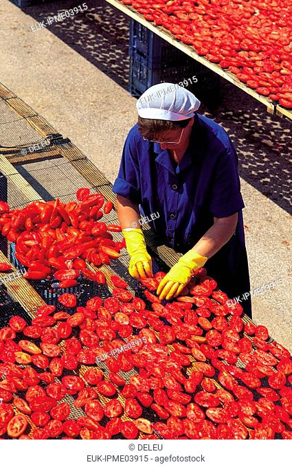 dried tomatoe factory Italy
