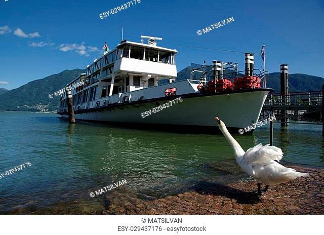 Passenger ship and a happy swan on an alpine lake with mountain and blue sky