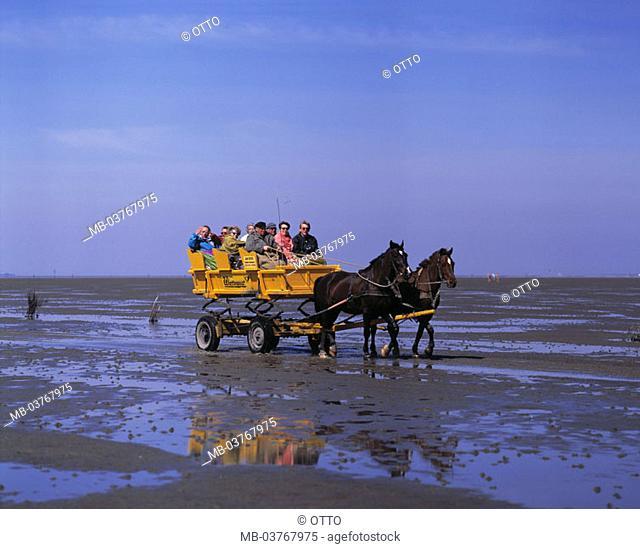 Germany, Lower Saxony, Cuxhaven, Mudflat, horse carriage,  Europe, Northern Germany, North sea, Nordseebad, Sea resort, Duhner watt, island Neuwerk, watt cars