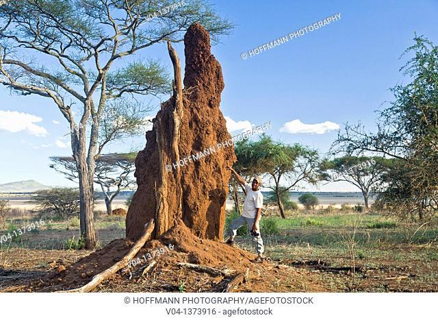 Guide explaining the construction of a termite mound, Tarangire National Park, Tanzania, Africa