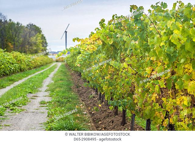 Canada, Ontario, Niagara On the Lake Wine Country, vineyards, autumn