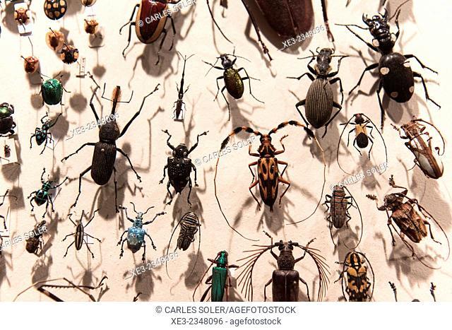 Entomological display. Museo de Ciencias Naturales, Madrid, Spain