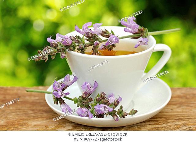 Sage infusion. Salvia officinalis