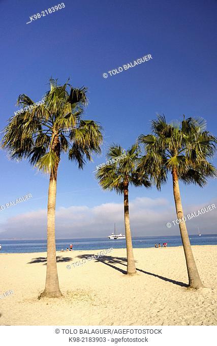 Son Maties beach, Palma Nova, Calvia,Majorca, Balearic Islands, Spain