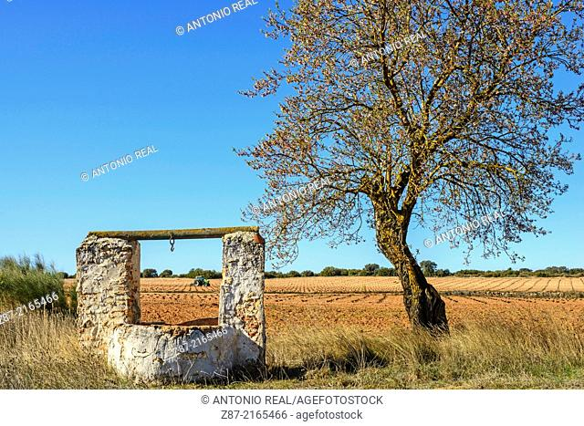 Well and tree, Almansa, Albacete province, Castilla-La Mancha, Spain