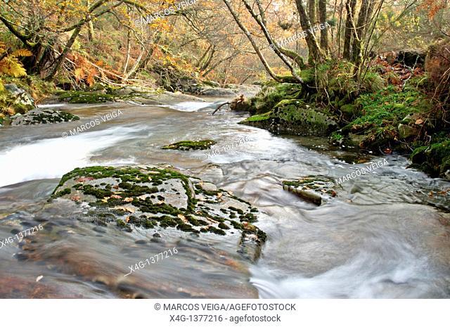 River Cerves  Melon, Ourense, Galicia, Spain