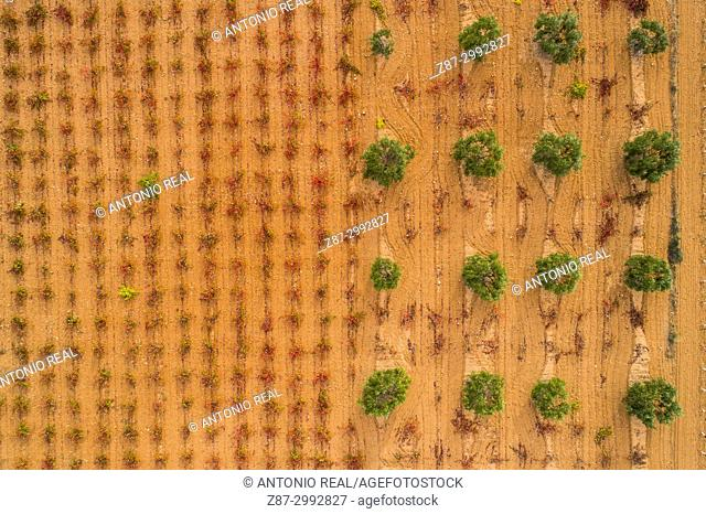 Vineyard and olive fields, aerial view. Alpera. Albacete Province. Spain
