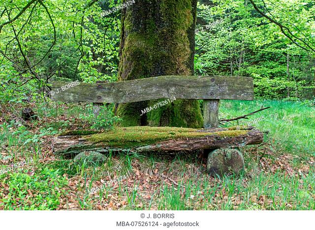 weathered bench in a beech forest