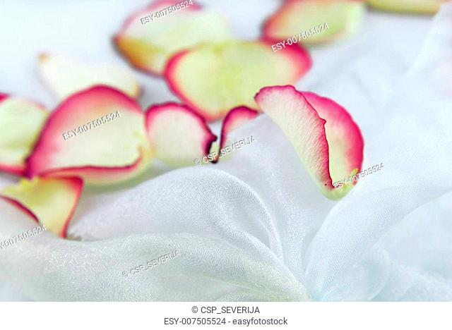 rose petals on white organza fabric