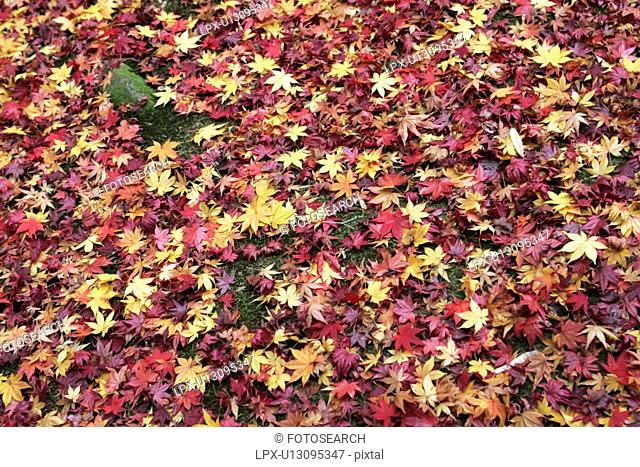 The Countless Autumn Leaves Which Fell To The Yard Of Moss