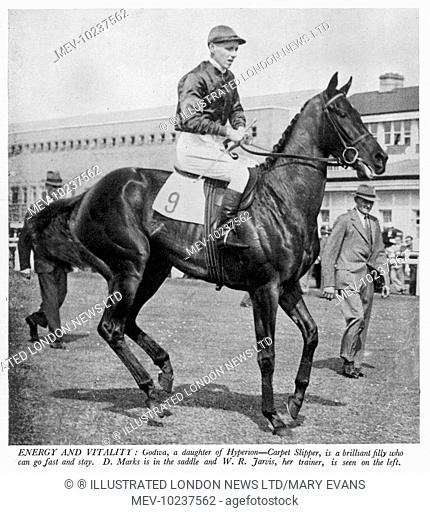 Godiva, a daughter of Hyperion and Carpet Slipper, with D.Marks in the saddle and W.R. Jarvis, her trainer on the left