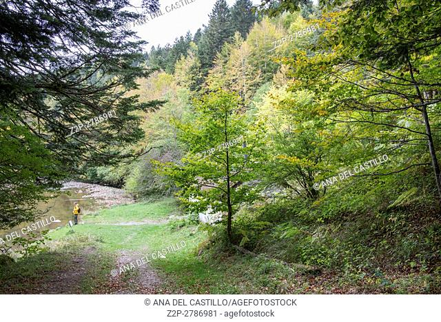 Autumn forest Selva de Irati fall beech jungle in Navarre Pyrenees of Spain