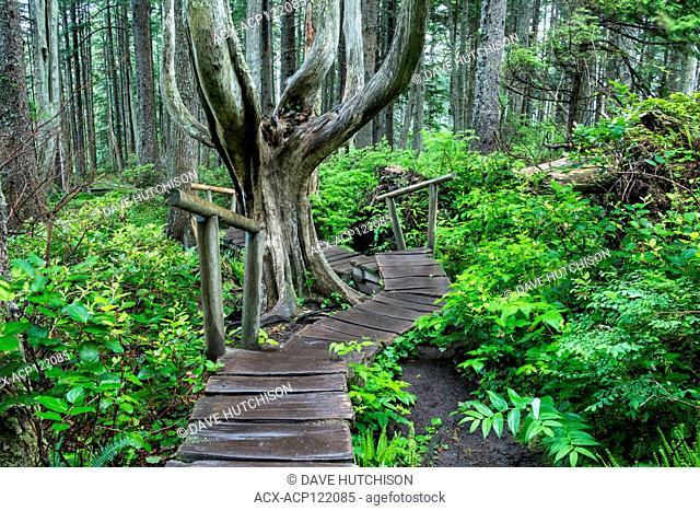 Cape Flattery, Pacific Northwest, Washington State, USA