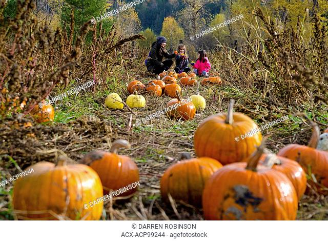 Mother and daughters selecting pumpkins in the pumpkin patch at Green Croft Gardens in Grindrod, in the Shuswap region of British Columbia, Canada