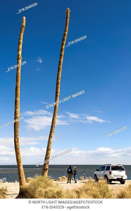 USA, California, Salton Sea, Salton City. Dead palm trees mark the seafront of abandoned seaside resort town
