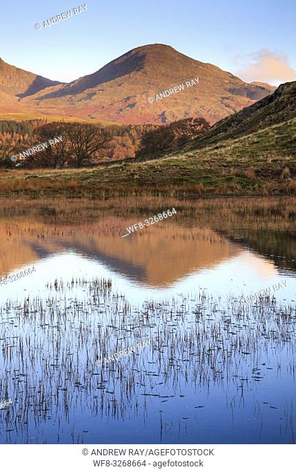 Kelly Hall Tarn near Torver in the Lake District National Park with the Old Man of Coniston in the distance