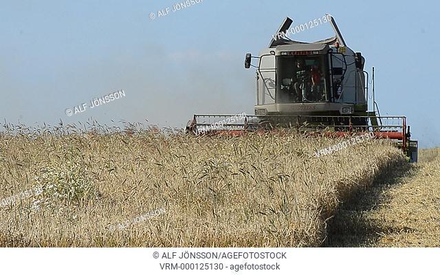 Combine-harvester harvesting corn