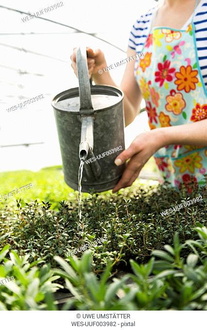 Young female gardener watering plants in nursery