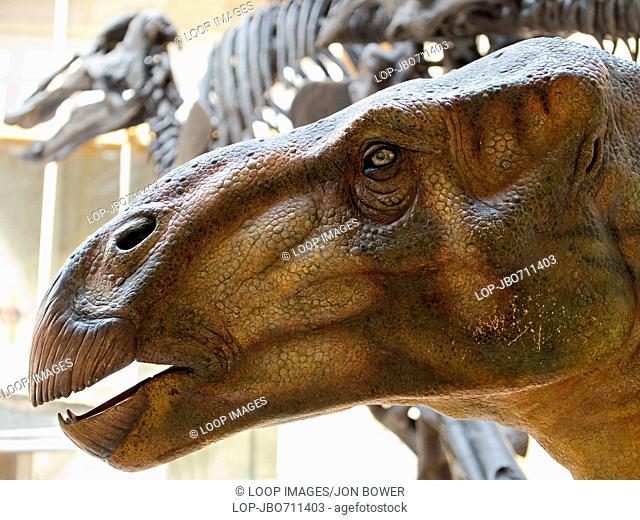 Dinosaur bones at the Pitt Rivers Natural History Museum in Oxford