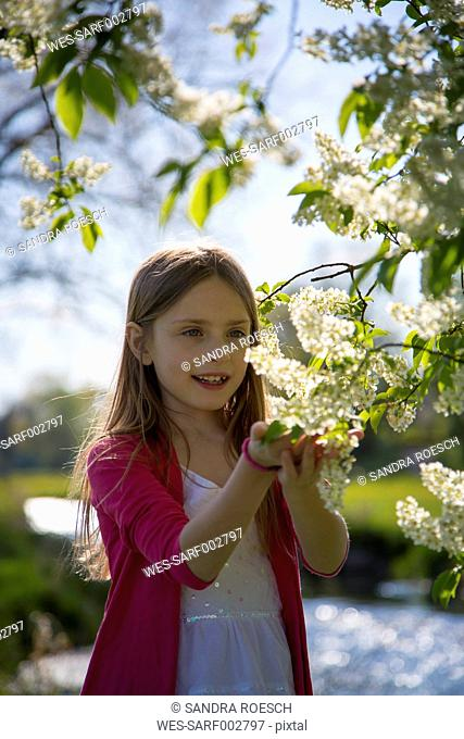 Little girl watching blossoms of a tree