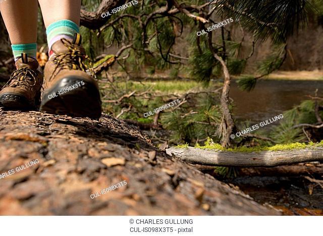 Woman hiking along tree trunk