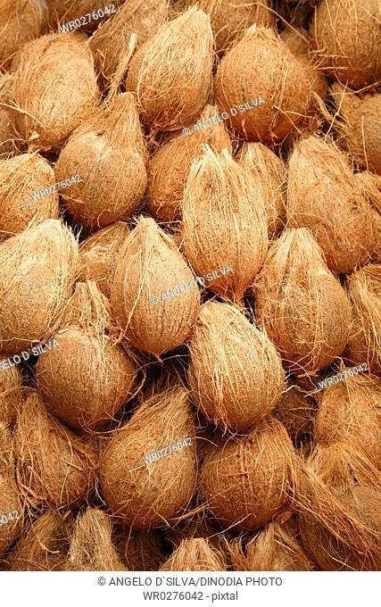 Heap of peeled off coconuts Cocos nucifera