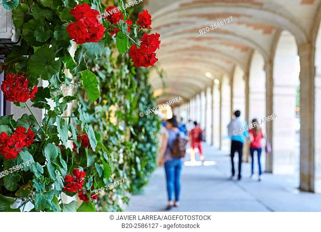 Geranium, Place des Vosges, Paris, France