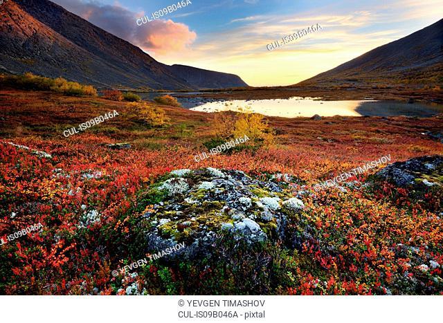 Autumn colours in Malaya Belaya River valley at dusk, Khibiny mountains, Kola Peninsula, Russia