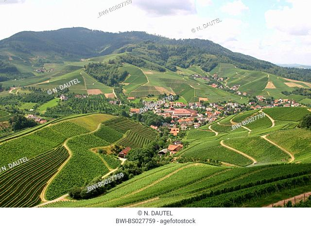 vineyards around Schloss Staufenberg, Germany, Baden-Wuerttemberg