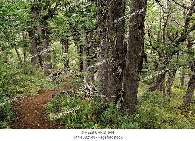 Trees, Cerro Otto, San Carlos de Bariloche, Parque Nacional, Nahuel Huapi, national park, Patagonia, Argentina, South