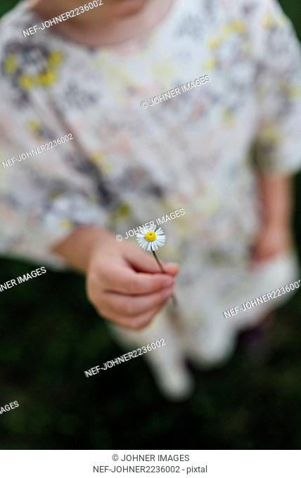 Girl holding daisy